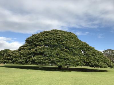 2017わくわくハワイIII 4泊6日③2日目 オプショナルツアーAチーム ノースショア(ハレイワ)観光