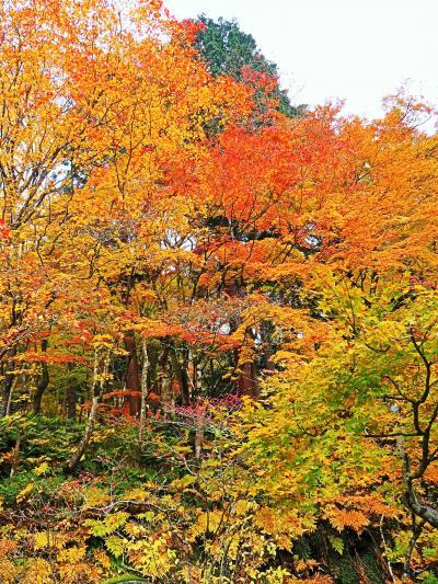湖東三山-2 釈迦山 百済寺 山懐の紅葉は鮮やかに ☆庭園鑑賞:滞在30分余で折り返し