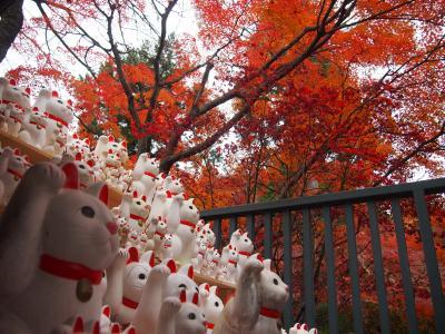 またイルミネーションを見に出かけたので、昼間は御朱印巡りでまた太子堂八幡神社と招き猫で有名な豪徳寺へ行ってきました