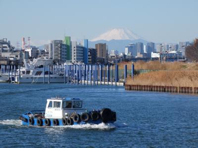 千葉と東京のウオーターフロント旧江戸川を歩く。