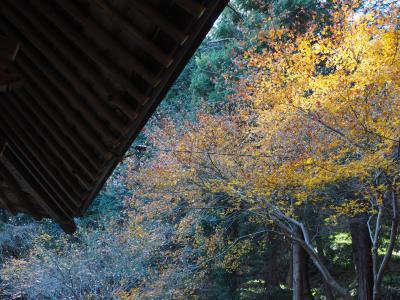 守山八幡宮 源頼朝が源氏再興を祈願し、平家打倒を目指して、挙兵した場所