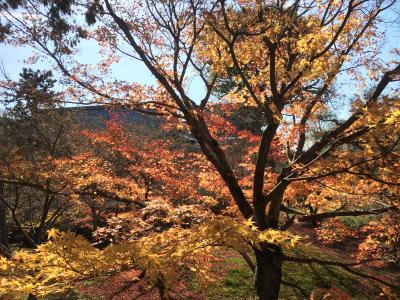 京都の紅葉と金魚の祭典 Vol.2 紅葉はショボかったけど、訳ありランチは豪華やで(^.^)