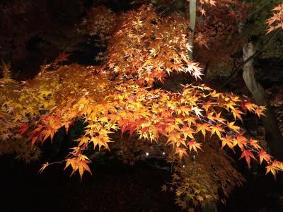 京都旅行 紅葉 一日目観光~東山-哲学の道からの永観堂ライトアップ
