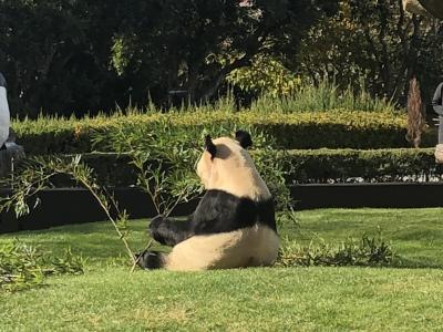 今何かと人気で話題のパンダを見に和歌山へ②【アドベンチャーワールド】