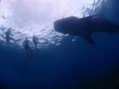 セブ 2日目  セブで何したい? ジンベイザメと泳ぎたい~(^^)v