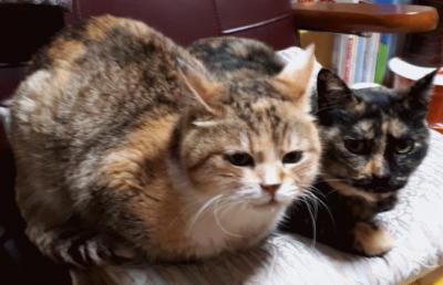 2017-2018年末年始は岩手県釜石市の実家猫ちゃんに会いにいこう♪