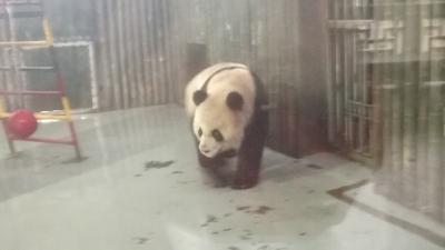 上野じゃなくて上海でパンダさん!独り占め(^o^)