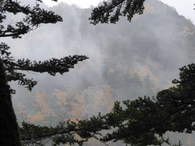 晩秋の上高地♪ Vol9(第2日) ☆明神池へ優雅に歩く♪深い針葉樹林♪