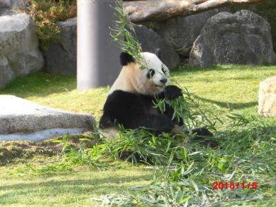 ええ大人がパンダを見に。白浜へ。
