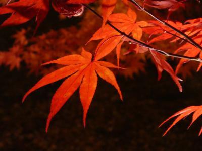 【京都】紅葉旅行(嵐山、永観堂ライトアップなど)