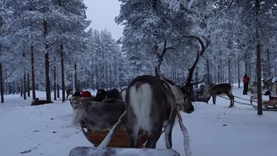 銀婚夫婦の冬のヘルシンキ、ロバニエミ 4