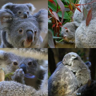 年末年始の休みは動物園に行きっぱなし!!