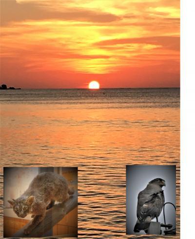 2018年正月、南の島々で新年を祝う! その③西表島周遊