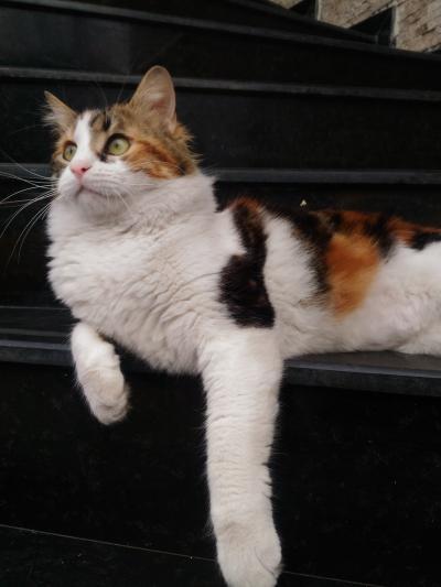 Cats in Turkey 2017