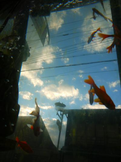 金魚が空を飛ぶ☆彡・・・カラフルな秋の奈良散策♪<奈良公園→正歴寺→近鉄郡山>
