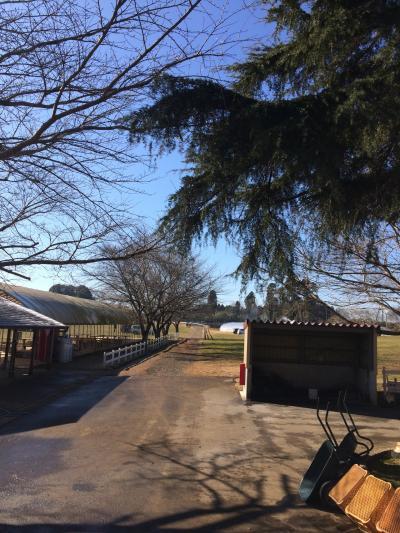 キャンプ#4 成田ゆめ牧場
