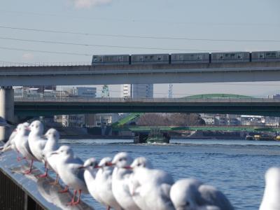 東京のウオーターフロント・隅田川を岩渕水門から浅草。