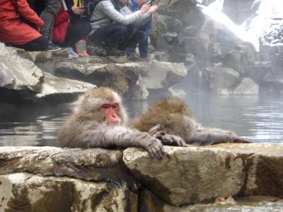 '18 長野・新潟100名城&グルメ旅11 「スノーモンキーホリデー観にバス」で地獄谷野猿公苑へ