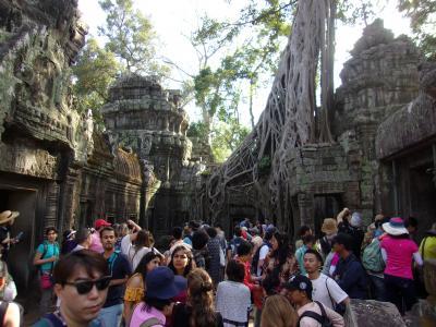 還暦過ぎ夫婦世界一周カンボジア3 アンコールトムのタ・プロームを樹木が抱擁していた。