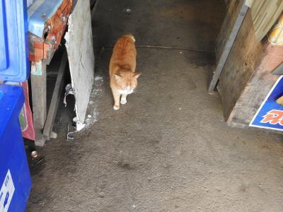 猫探し【タイ(チェンマイの郊外・Suburb of Chiang Mai)編】