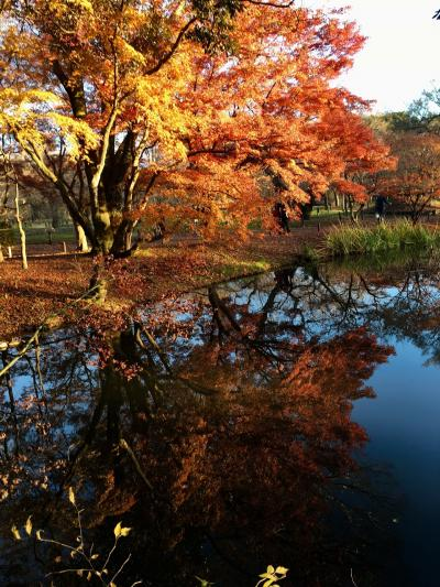 京都旅行 紅葉二日目観光~京都府立植物園