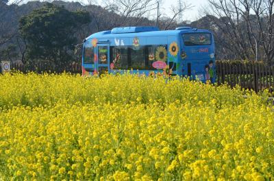 くりはま花の国 冬はアイスチューリップ、菜の花など
