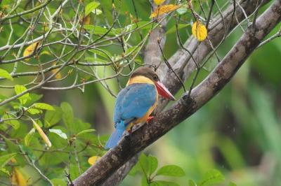 雨季のシンガポール探鳥 その3 シンガポール植物園 子供ガーデンとエコレイク