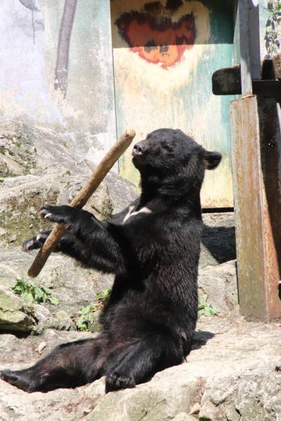 2017年9月2週続けてのレッサーパンダ遠征<山口&広島>(5)安佐動物公園(1)ショートカットで猛獣エリア~ツキノワグマのクラウドくんの鼓笛隊のバトンのごとく見事な棒回し!