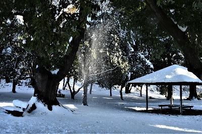 首都圏大雪 雪景色にカメラで遊ぶ