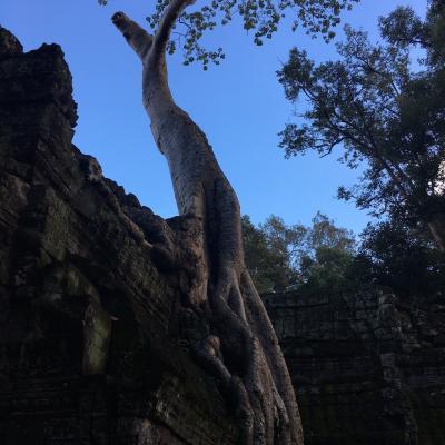 #ガジュマルの木の遺跡 タ・プロームとベンメリア遺跡