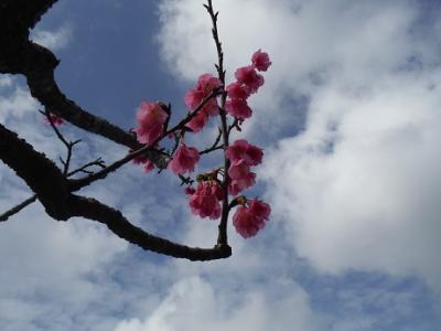 今年も日本一早い花見