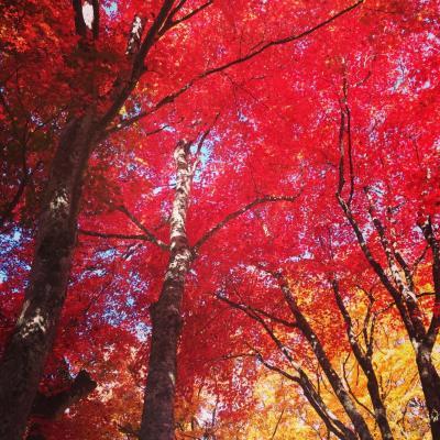 中野紅葉山から弘前へ