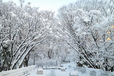 雪の新宿中央公園