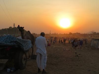 初インドを一ヶ月縦断一人旅してみた 5日目 ラクダだらけのプシュカルフェア