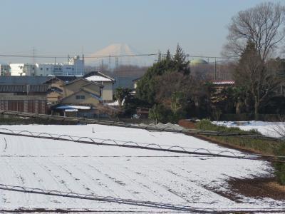 1月31日、久しぶりに見られた富士山
