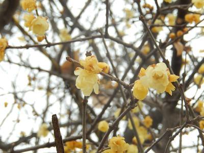 春の息吹を求めて散策する④