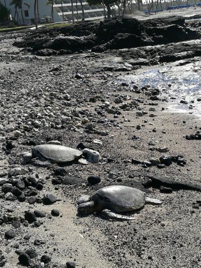 ハネムーンでハワイ島→オアフ島8泊10日 2日目 寝坊とオーラとウミガメと編