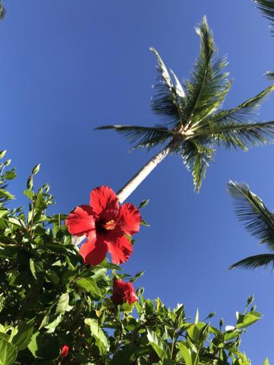 マイルで冬休み~ハワイ島&オアフ島~