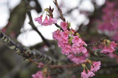 沖縄に花を見に行く 2日目