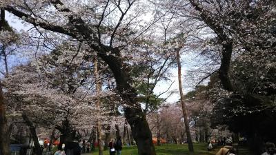 2月に決めた、大宮公園花見旅。