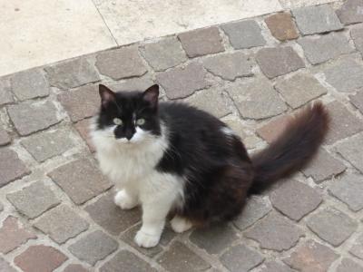 春のアブルッツォ州/モリーゼ州 出会った猫・犬・動物たち♪