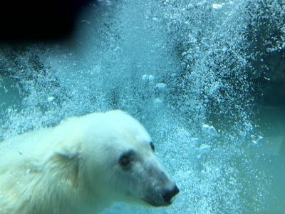 真冬の北海道!5 雪まつりとペンギンの散歩! 寒いいいい~っ! マイナス20度の旭川!