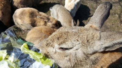 大久野島でウサギに癒されたーい!(2018.02広島・前編)