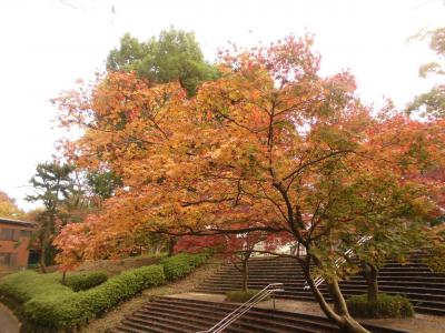 白根公園の紅葉