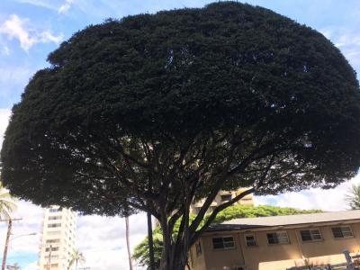 変わった木