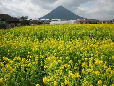 薩摩・明治村 美味し薩摩の味と早春の長崎鼻・指宿温泉をぶらぶら歩き旅ー1