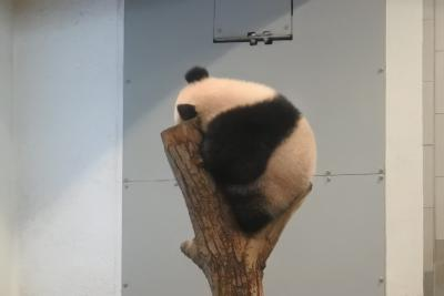 はじめましてシャンシャン!上野動物園