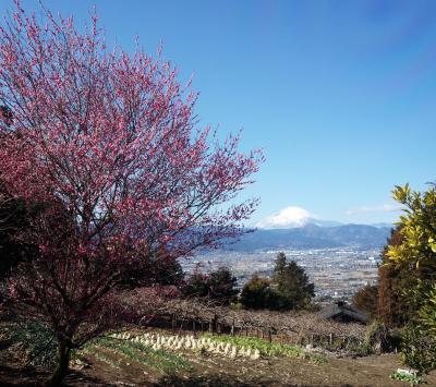 別所・曽我梅林と富士山遠望