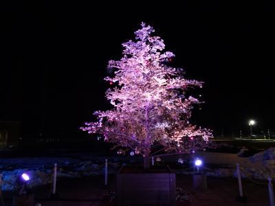 2017.12.22 長岡丘陵公園 イルミネーション