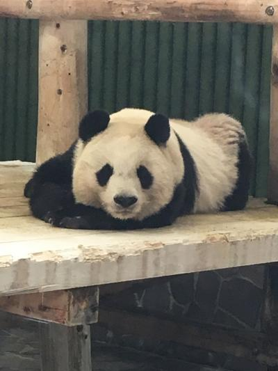 ジャイアントパンダに会いたい!神戸日帰り旅行①